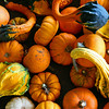 Pumpkin Gourds : Ajax ON