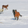 Horse Play : Ajax { This playful bunch of horses galloped up to greet me.}