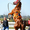 Ajax Downs (Picov Downs) : Ajax : Quarter Horse racing, a day of hooves'n horsepower at Ajax Downs Race Track. Sadly, this year the track has gone via the wrecking ball and replaced with a sterile, brand new and nondescript  modern horse arena.