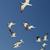 Sea Birds : Marco Island