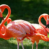 Too Pink: Toronto Zoo